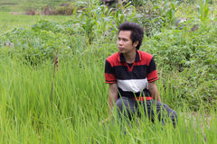 Asia man in rice field Stock Photography