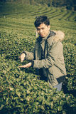 Asia Man in tea plantation Stock Photography