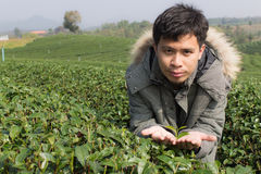 Asia Man in tea plantation Royalty Free Stock Photos