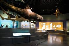 Asia museo de China, Tianjin de la historia natural, escena biológica marina foto de archivo