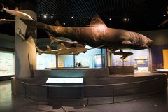 Asia museo de China, Tianjin de la historia natural, escena biológica marina foto de archivo libre de regalías