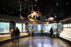 Asia museo de China, Tianjin de la historia natural, escena biológica marina fotos de archivo