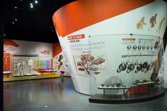 Asia museo de China, Tianjin de la historia natural, esquelético fotos de archivo