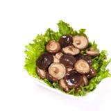 Asia Mushrooms Stock Photography