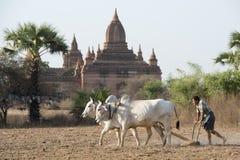 ASIA MYANMAR BAGAN TEMPLE PAGODA AGRACULTURE Royalty Free Stock Photo