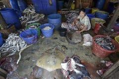 ASIA MYANMAR MYEIK DRY FISH PRODUCTION Royalty Free Stock Image