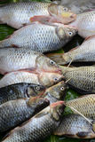ASIA MYANMAR NYAUNGSHWE FISH MARKET Royalty Free Stock Photo