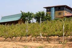 ASIA MYANMAR NYAUNGSHWE WINE Royalty Free Stock Image