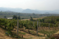 ASIA MYANMAR NYAUNGSHWE WINE Royalty Free Stock Photos