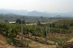 ASIA MYANMAR NYAUNGSHWE WINE Royalty Free Stock Photos