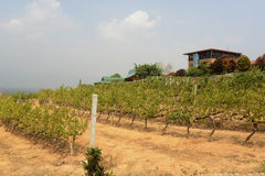 ASIA MYANMAR NYAUNGSHWE WINE Stock Image