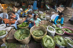 ASIA MYANMAR YANGON MARKET BETEL LEAFES Stock Images