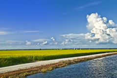 Asia Paddy Field Series 6 Stock Image