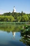 Asia parque de China, Pekín, Beihai, charca de ŒLotus del ¼ del landscapeï del verano, la pagoda blanca, reflexión Fotografía de archivo