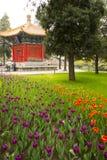 Asia parque de China, Pekín, Zhongshan, el jardín de flores, tulipán Imágenes de archivo libres de regalías