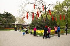 Asia parque de China, Pekín, Zhongshan, el jardín de flores, tulipán Imagenes de archivo