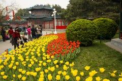 Asia parque de China, Pekín, Zhongshan, el jardín de flores, tulipán Foto de archivo