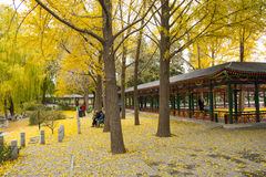 Asia parque de China, Pekín, Zhongshan, paisaje del otoño Fotografía de archivo