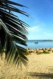 Asia in    phangan  isle   beach    rocks pirogue palm  china se Stock Photography