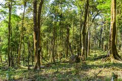 Asia rainforest with big tree stock photography