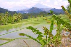 asia riceterrasser Arkivbilder