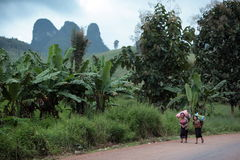 ASIA SOUTHEASTASIA LAOS VANG VIENG LUANG PRABANG. Women with fegetable near the Village of Muang Phou Khoun on the Nationalroad 13 on the way from Vang Vieng to Stock Photos