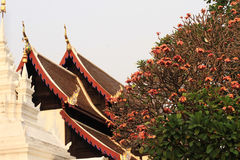 Asia Temple roof Royalty Free Stock Images