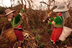 ASIA THAILAND CHIANG MAI FARMING Royalty Free Stock Image