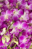 ASIA THAILAND CHIANG MAI TALAT WAROROT FLOWERS Royalty Free Stock Photo