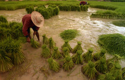 ASIA THAILAND ISAN AMNAT CHAROEN Stock Photo