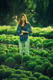 Asia tourist woman on vegetable farm at angkhang mountain Thaila Stock Images