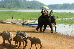 Asia travel, summer vacation, eco tour, elephant Stock Photography