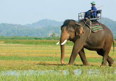 Asia travel, summer vacation, eco tour, elephant Stock Image
