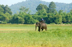 Asia travel, summer vacation, eco tour, elephant Stock Images