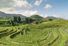 Asia village agriculture Rice Field hill Royalty Free Stock Images