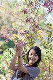 Asia Woman With Wild Himalayan Cherry flower Stock Photos