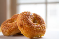 Asiago & Cheddar Cheese Bakery Fresh Bagel Royalty Free Stock Photos