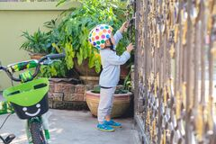 Free Asian 2 - 3 Years Old Toddler Boy Child Wearing Safety Helmet Near His Bike, Kid Reaching Up Try To Open Gate Of The House Stock Images - 172031334