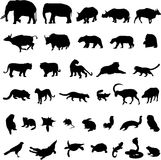 Asian animals. The representation of Asian animals Stock Image