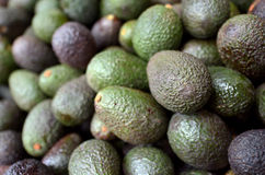 Asian Avocado fruit Royalty Free Stock Image