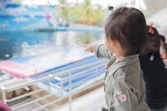 Asian baby girl enjoying to see dolphin show. Royalty Free Stock Photography