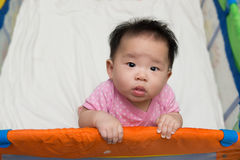 Asian baby in playpen Stock Photography