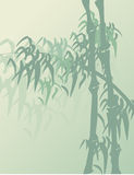 Asian bamboo background Stock Photography