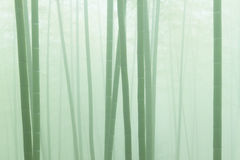 Asian bamboo forest with morning fog weather. In hill Royalty Free Stock Image