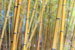 Asian Bamboo forest with morning sunlight. Stock Photos