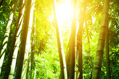 Asian bamboo forest and sun light Stock Photo