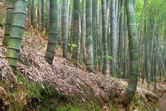 Asian bamboo garden Stock Images