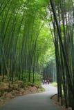Asian bamboo garden Stock Photos