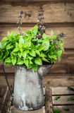 Asian basil in old tin jug  on wooden Royalty Free Stock Photography