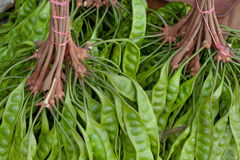 Asian bean; Parkia speciosa Royalty Free Stock Images